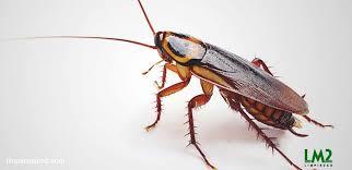 Fumigaciones de insectos en general 975255535 6275682